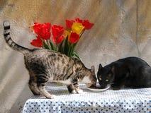 Restaurante para gatos fotografia de stock