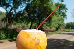 Restaure la bebida en clima tropical caliente foto de archivo