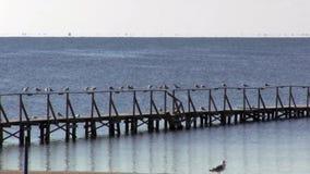 Reste de mouettes sur la balustrade du pilier, un amarrage de bateau banque de vidéos