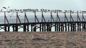 Reste de mouettes sur la balustrade du pilier, un amarrage de bateau Endroit méditatif banque de vidéos