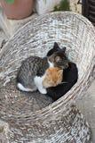 Reste de trois chats dans le froid Images stock
