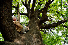 Reste sur un arbre Photographie stock