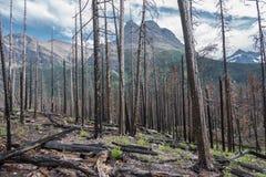 Reste von Forest Fire Stockfotos