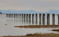 Resten van een Kanarie op Fraser River stock foto's