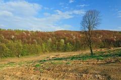 Restert träd efter skogsavverkning Arkivbild