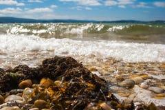 Restes d'algue et de coquillages sur un Pebble Beach avec l'oc?an et les vagues ? l'arri?re-plan et un ciel bleu avec des nuages photo libre de droits