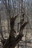 Restes d'un arbre Photographie stock libre de droits