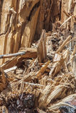 Restes d'un arbre cassé Photo libre de droits