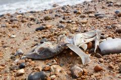 Restes d'un requin de lisse-chien image stock