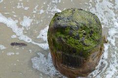 Restes d'un vieux dock Photographie stock libre de droits