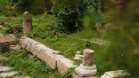 Restes de vieux murs de monastère cachés derrière les branches denses des thujas, reliques clips vidéos