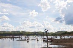 restes des arbres morts Photographie stock