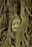 Restes des statues de Bouddha la tête dans l'arbre Wat Mahathat Photographie stock libre de droits