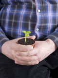 Restful life. Plant in the man`s hand, restful life Royalty Free Stock Images