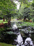 Restful lily pond Royalty Free Stock Photography