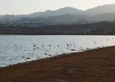 Resti dei fenicotteri nel parco birding fotografia stock