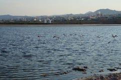 Resti dei fenicotteri nel parco birding fotografie stock