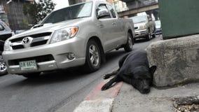 Resti del cane randagio su una via della città Fotografia Stock Libera da Diritti