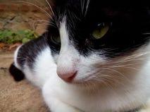 Resti del gatto Fotografie Stock Libere da Diritti