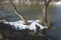 Resti di neve sulla banca di piccolo fiume con i tronchi di vecchi alberi fotografia stock