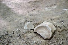 Resti di vecchio vaso di argilla scoperto nello scavo archeologico nell'area di Judaean Shefela di Israele, EL-rai di Khirbet fotografia stock libera da diritti