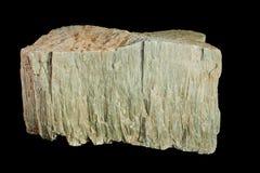 Resti fossilizzato di un albero fotografia stock
