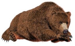 Resting bear. 3D render of a resting bear Stock Images