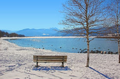 Resting bench beside birch tree, view to lake tegernsee in winte Stock Image