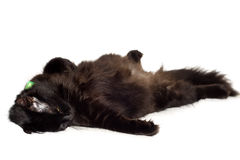 Resting black cat Stock Photography