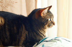 Resting cat Stock Photo