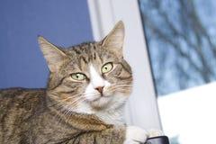 Resting Cat Stock Photos
