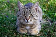 Resting cat Stock Image