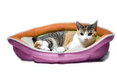 Resting cat isolated. A cute house cat resting in her basket Royalty Free Stock Photos