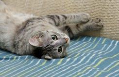 Resting cat Royalty Free Stock Photos