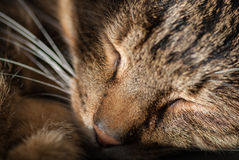 Resting cat Royalty Free Stock Images