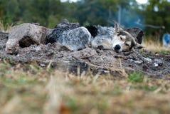 Resting dog. Wet puppy dog sitting on ashes Stock Photo