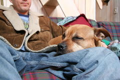 Resting Dog. On Man's Lap stock images