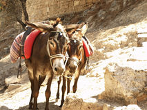Resting donkeys. Donkeys used to transport tourists to the Acropolis in Lindos, Rhodes, Greece royalty free stock image