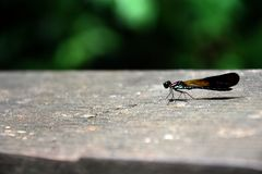 Resting dragonfly with soft blurry background Royalty Free Stock Photo