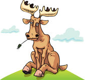 Resting dull moose. Dull moose is relaxing on the green lawn Royalty Free Stock Image