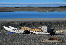 Resting Ellesmere Island Sled Dogs Royalty Free Stock Images