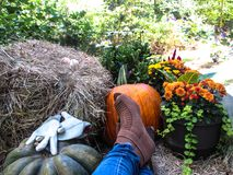 Resting at the end of a busy fall day. royalty free stock images