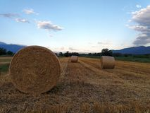 Resting field with bales of drying hay Royalty Free Stock Photography