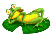 Resting frog Royalty Free Stock Image