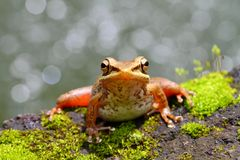 Resting Frog Stock Photo