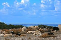 Resting goats. Stock Photo