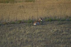 Resting on a hillside Royalty Free Stock Photo