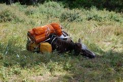Resting horse. Stock Photo