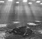 RESTING HORSE UNDER SUNBEAMS AT DE STAP Royalty Free Stock Photography
