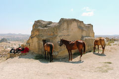 Resting horses at Cavusin old village, cave town in Cappadocia, Turkey Stock Photos